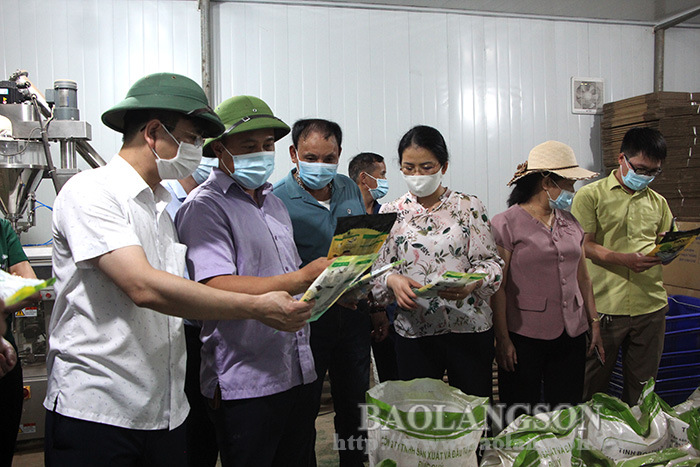 The leader of the Provincial People's Committee surveys the processing area of black jelly in Trang Dinh