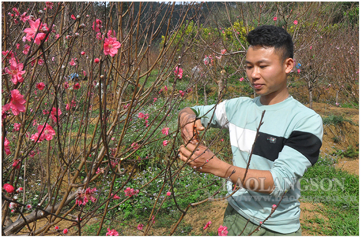 Lang Son city ready to host third peach blossom festival