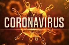越南市场管理部门配合防控新型冠状病毒感染的肺炎疫情